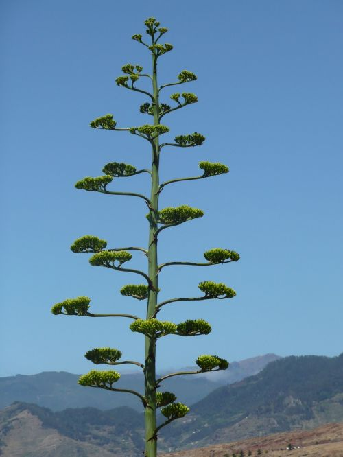 madeira nature plant