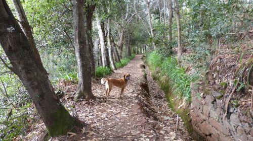 madeira portugal levada