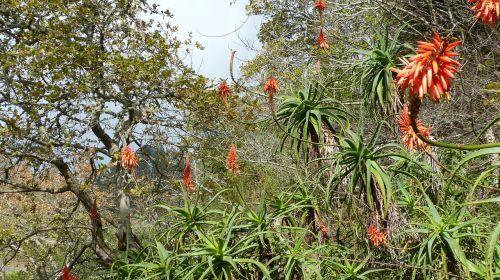 madeira portugal flora
