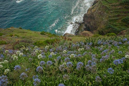 madeira  cliffs  agapanthes