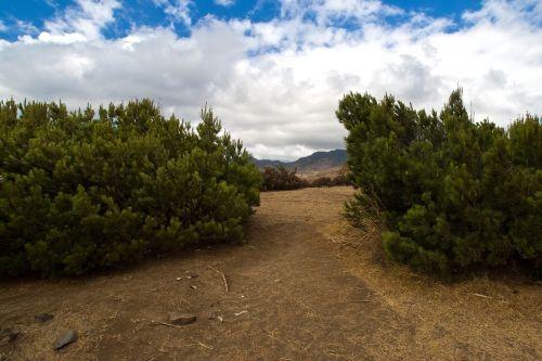 madeira pine forest