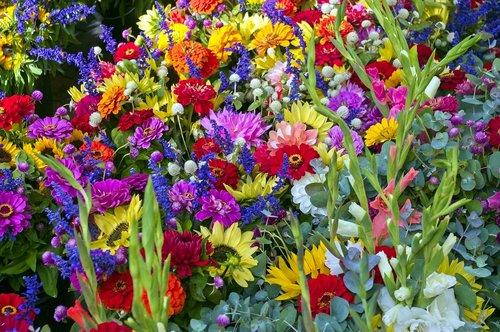 madison farm market flowers  sunflowers  flowers