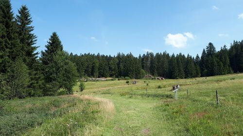 magic forest hiking walk