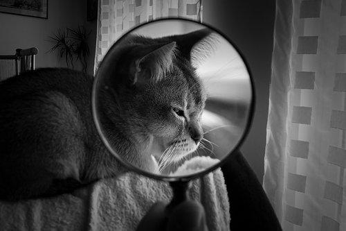 magnifying glass  cat  pet