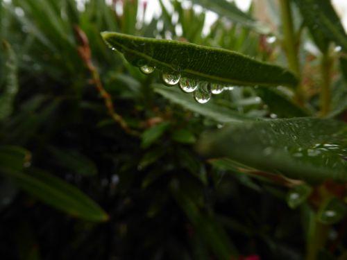 Magnifying Raindrops