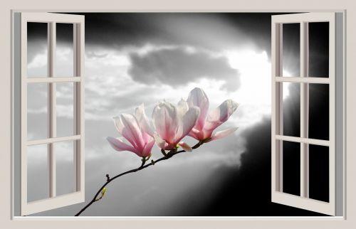 magnolia flower spring