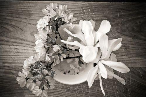 magnolia cherry blossom flower