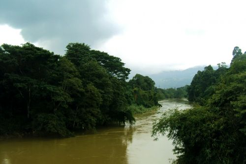mahaweli upė,upė,žali medžiai,dangus,debesuota dangaus,Šri Lanka,ceilonas,užtvindyta upė,potvynis,peradeniya