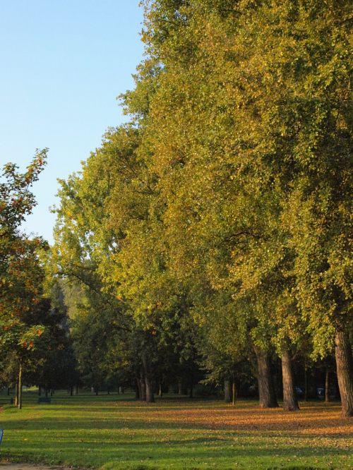 main lawn main aue trees