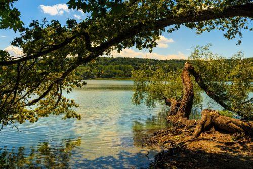 mainau island tree water