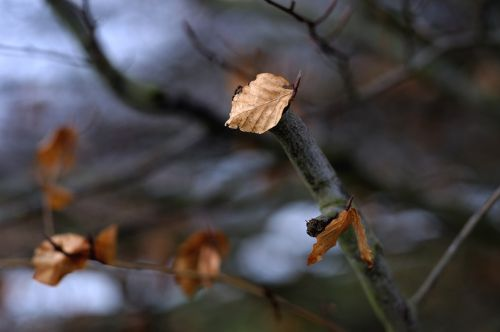 maintained sheet clings to the tree winter