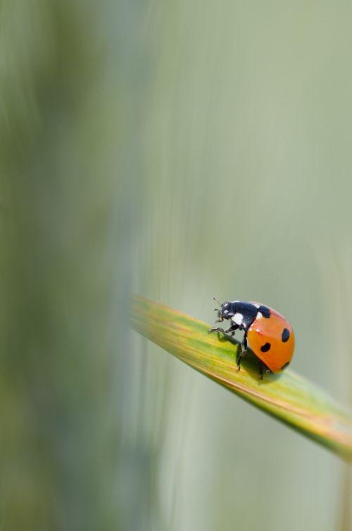 maize ladybug green