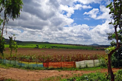 maize cultivation harvest-ready stratocumulus-clouds