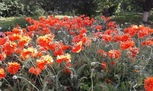 maki summer flowers