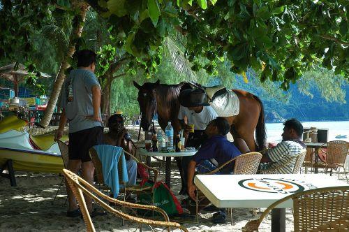 malaysia beach horse