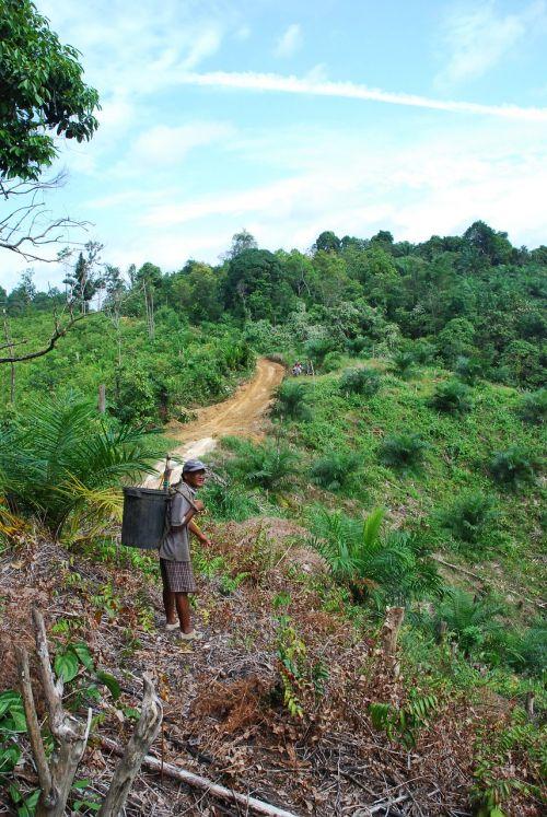 malaysia jungle tropical