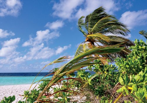 maldives palm sea