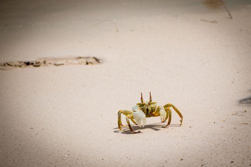 maldives sand beach