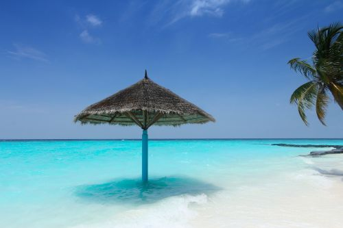maldives palm trees beach