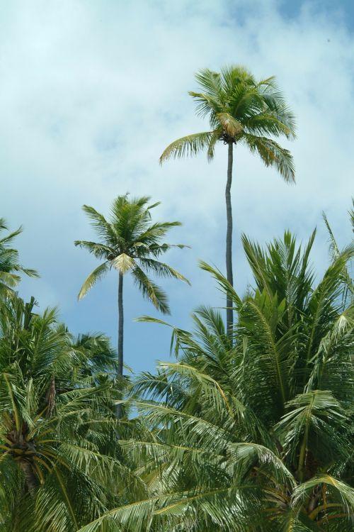maldives palms beach