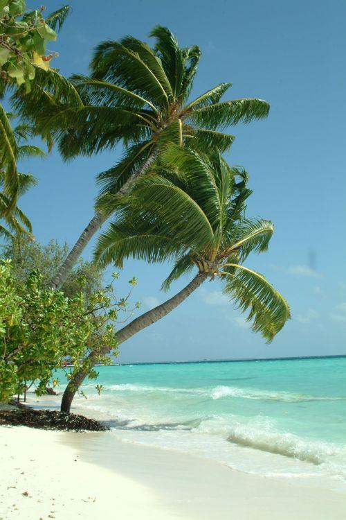 maldives palma beach