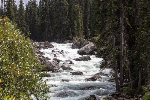 maligne river jasper alberta
