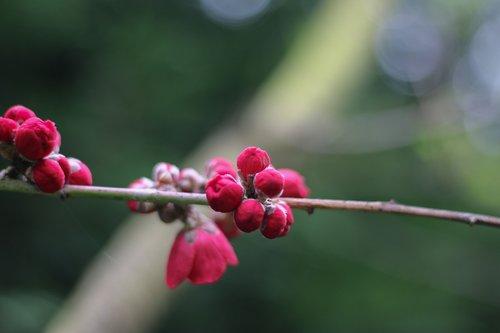 malus  nature  plant
