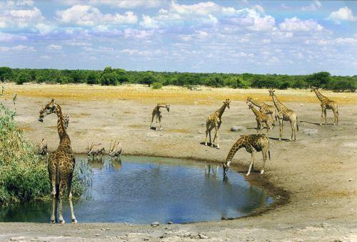 mammal wild animal africa