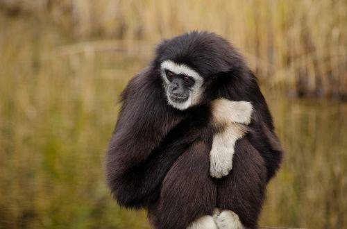 mammal animal world monkey