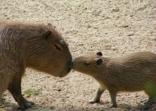 mammal animal wildlife