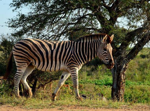 mammal wildlife nature