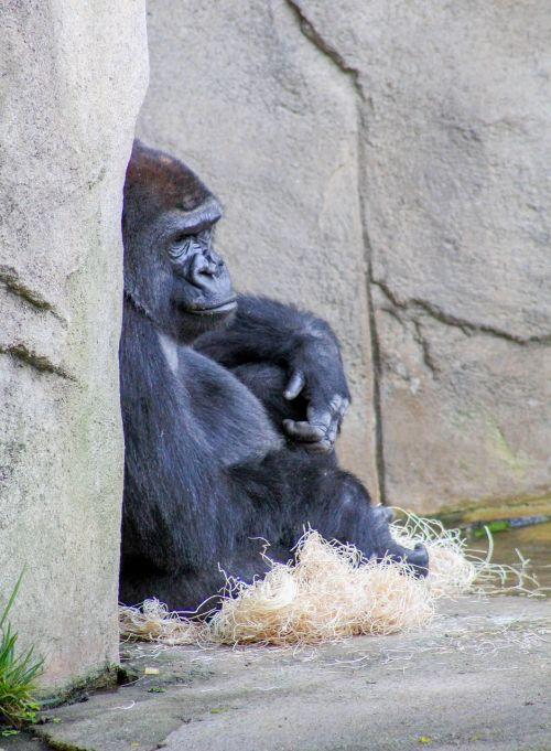 mammal outdoors primate