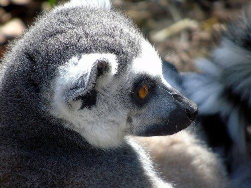 mammal  wildlife  primate