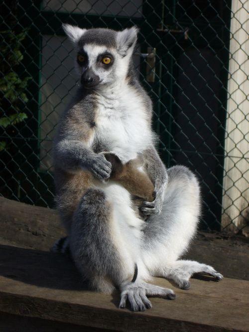mammals cute primates