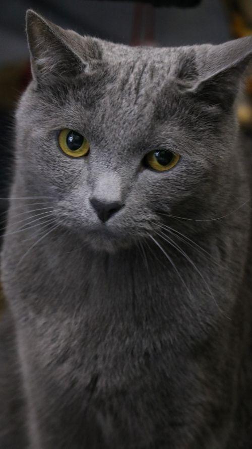 mammals animal cat