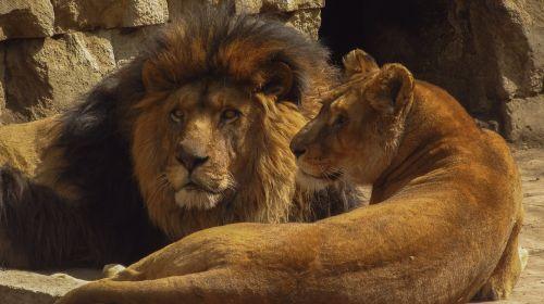 mammals wildlife al