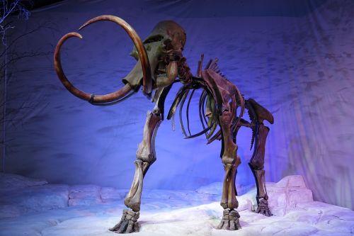 mammoth skeleton prehistoric
