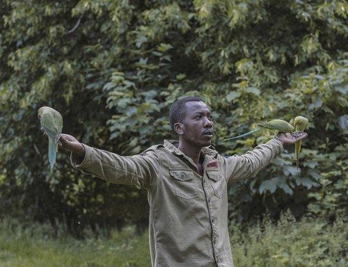 man  bird man  birds