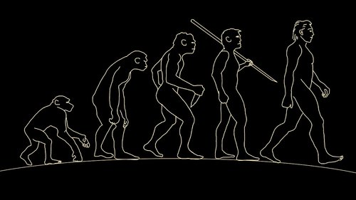 man  human  evolution
