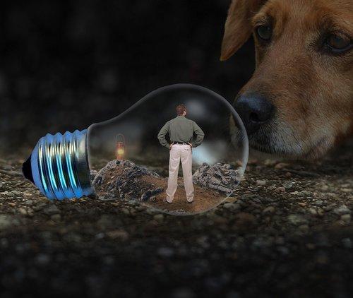man  light bulb  dog