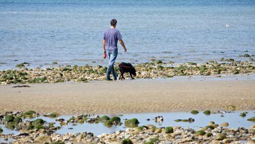Man Dog Walking On Beach