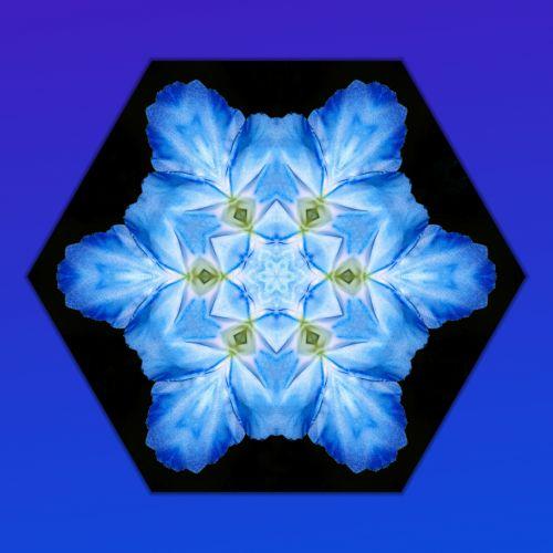 Mandala Flowers (6)
