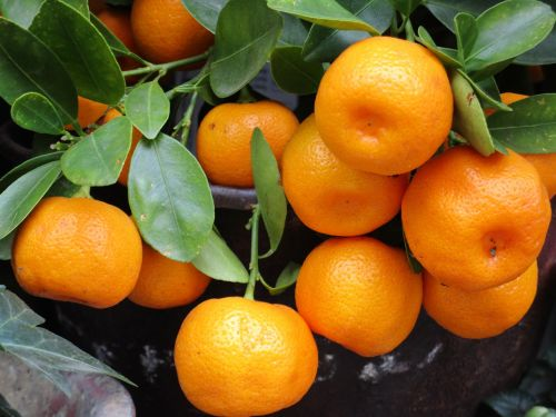 mandarin fruit orange