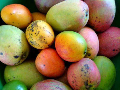 mango fruit healthy