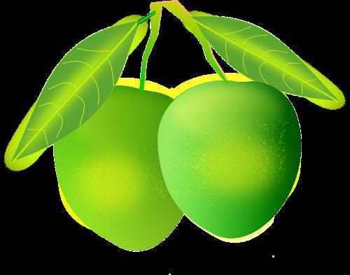 mangos green fruit