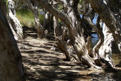 mangrove beach nature