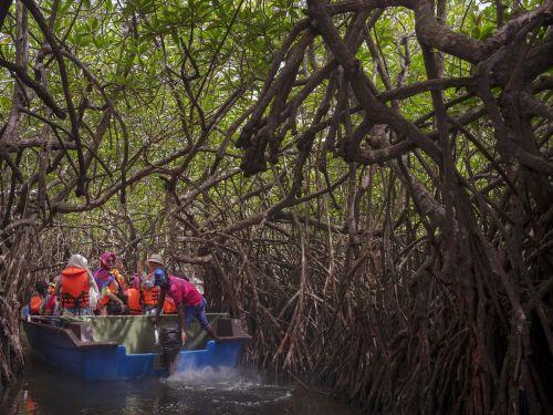 mangrove sri lanka forest