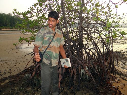 mangrove forest guide