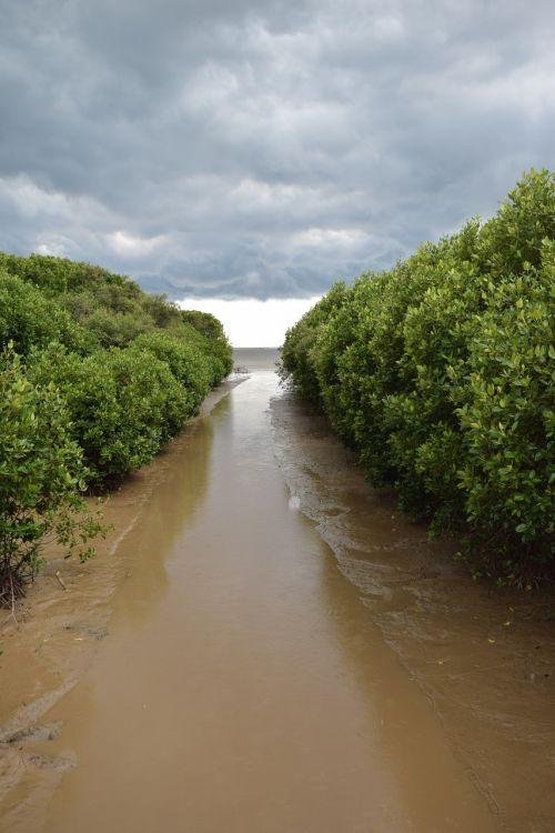 mangrove forest water recreation mangrove island
