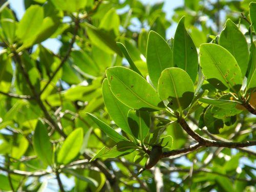 mangrove trees trees beach